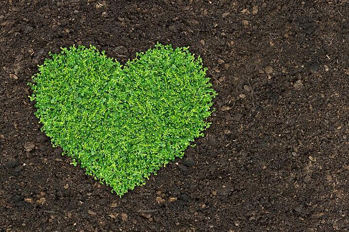 Why you should fertilise your lawn and gardens