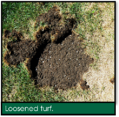 Signs of Lawn Grubs - Loosened Turf.png