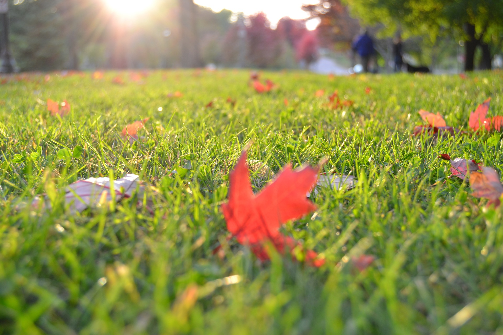 Beautiful autumn grass - free of autumn lawn grubs.jpg