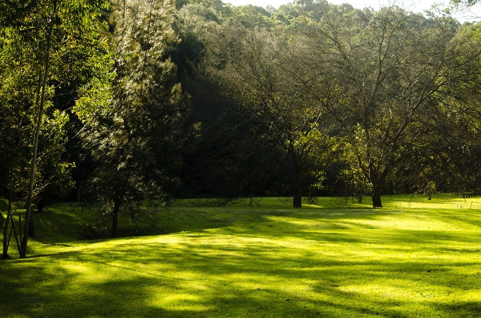 The Most Shade Tolerant Lawn Turf