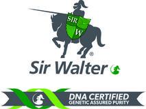 Sir Walter Buffalo Grass Lawn Sydney – Green Life Turf
