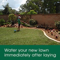 Immediately water your lawn after laying