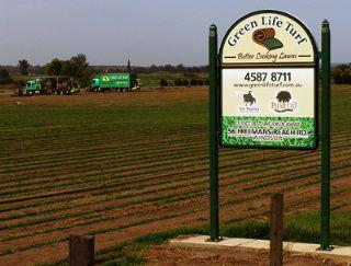Our Green Life Turf Farm | Sir Walter DNA Certified Buffalo, Eureka Kikuyu, Nullarbor Couch, Platinum Zoysia grasses