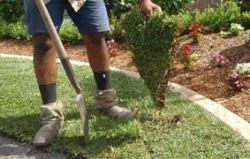 We lay your turf beautifully and professionally