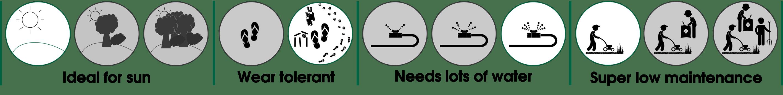Eureka Kikuyu Turf Grass Properties & Behaviour Set - How to Care for Eureka Kikuyu Lawn