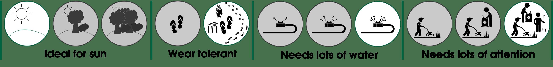Eureka Kikuyu Properties & Behaviour Set - How to Care for Eureka Kikuyu