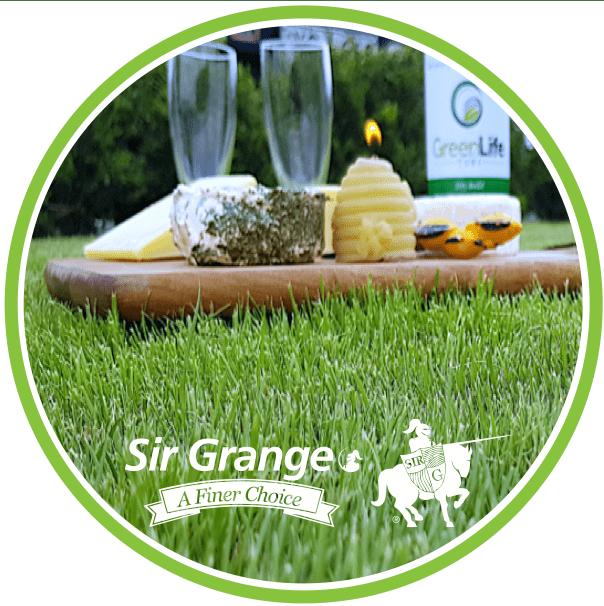 Sir Grange Zoysia Turf Grass