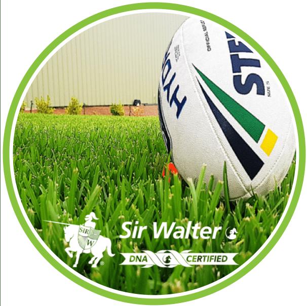 DNA Certified Sir Walter Buffalo Turf Grass