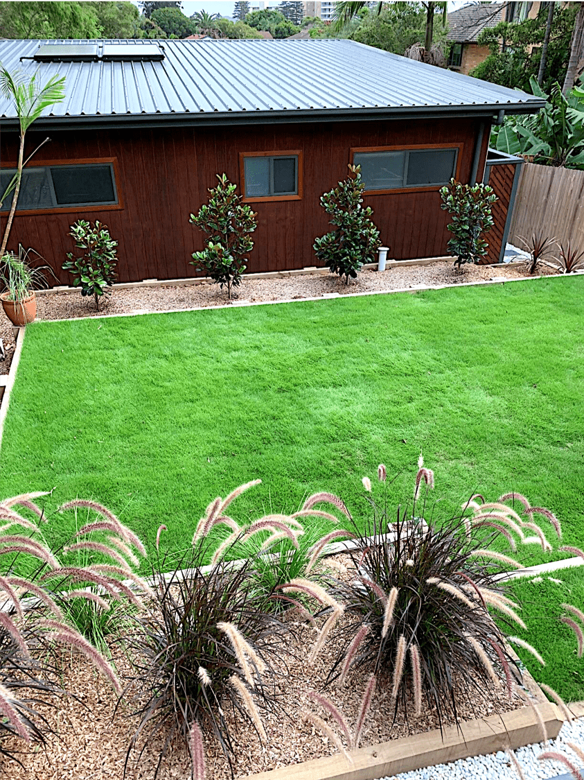 Sir Grange Zoysia Grass - a great family lawn