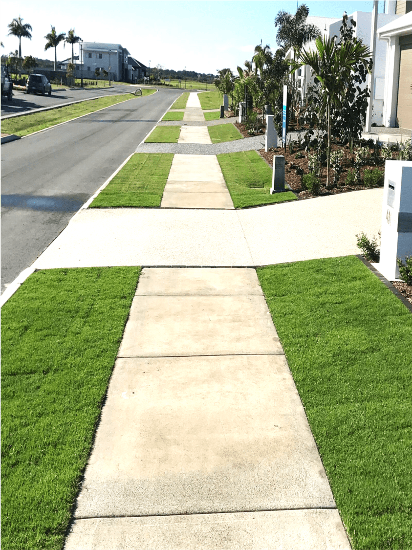 Sir Grange Zoysia Grass - perfect road verge street appeal
