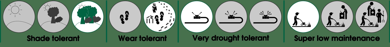 Sir Grange Zoysia Properties & Behaviour Set - How to Care for Sir Grange Zoysia