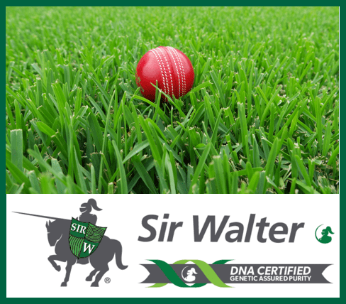Sir Walter DNA Certified Buffalo