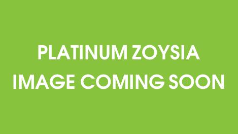 Platinum Zoysia